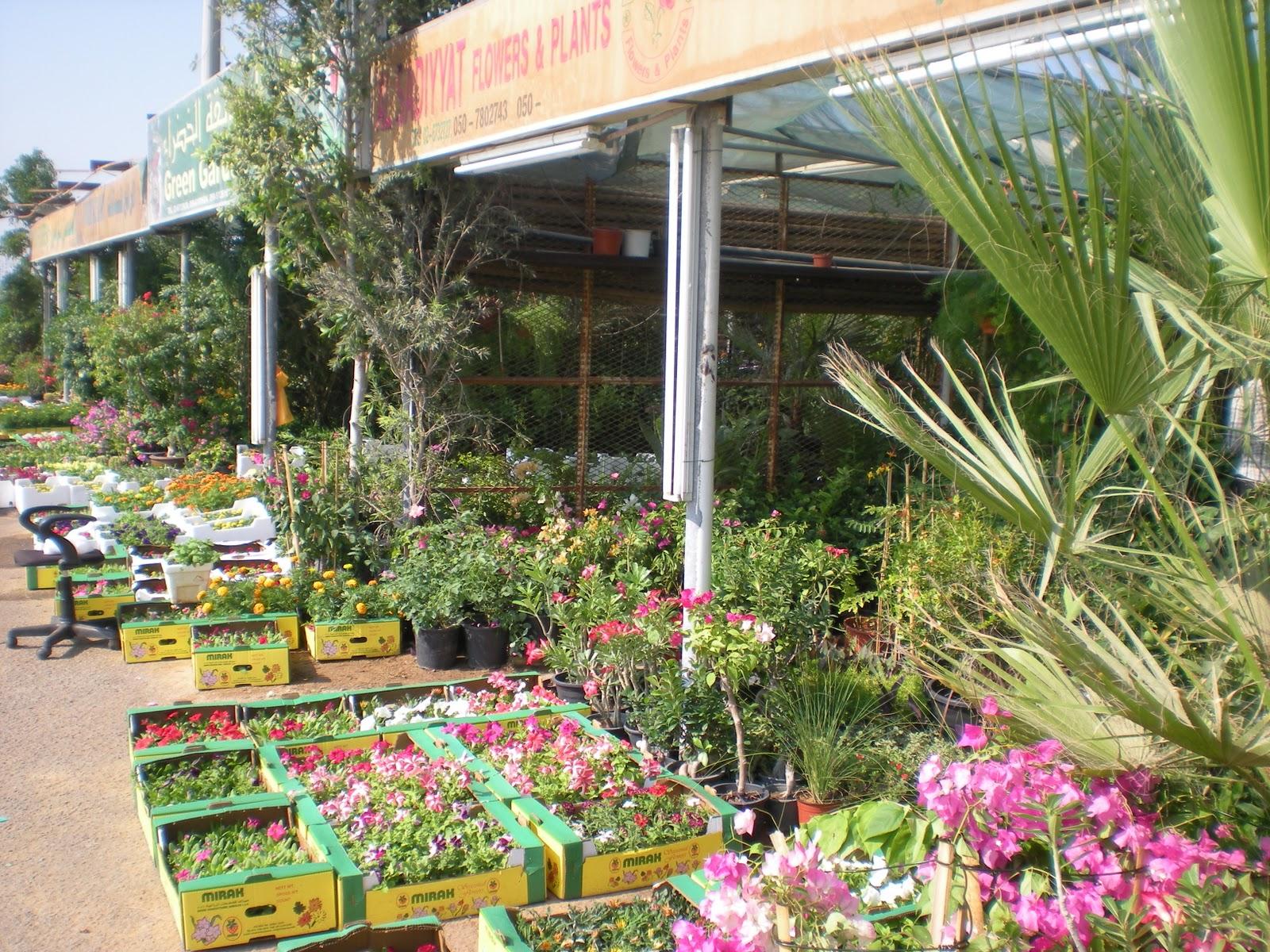 Nick's Garden: seeking plants in the souk – Writing to Inform
