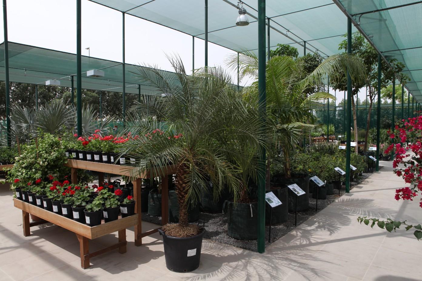 Dubai s new greenworks nursery a breath of fresh air for for Garden design dubai