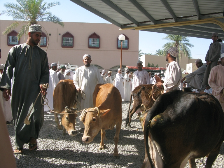 Nizwa's Friday morning livestock market