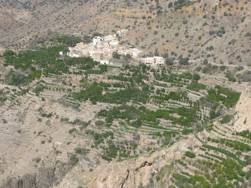 The terraces of the Jebel Al Akhdar